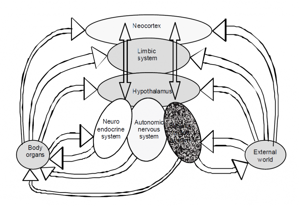 Fig. 1.1 A modified version of Janig and Habler's model of the integration andrelationships of the brain and body. What it so nicely illustrates are the forward andback communication links between all levels of the nervous system, the body, and theenvironment. Communication is via neuronal, hormonal and humoral pathways.